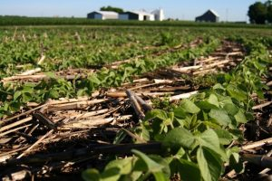 Soybeans loss